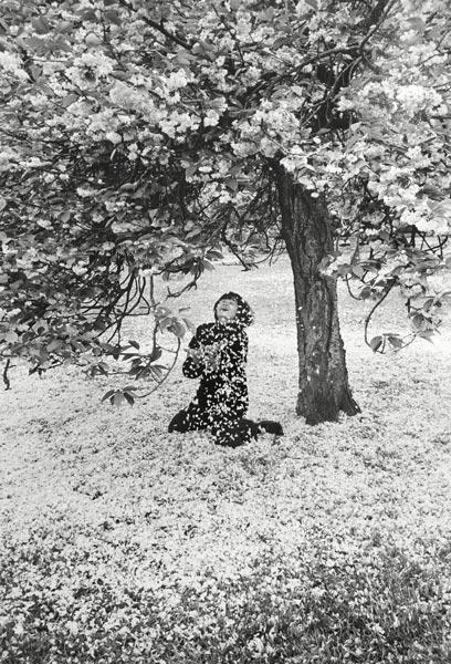 Cerisier en fleurs, France, 1983